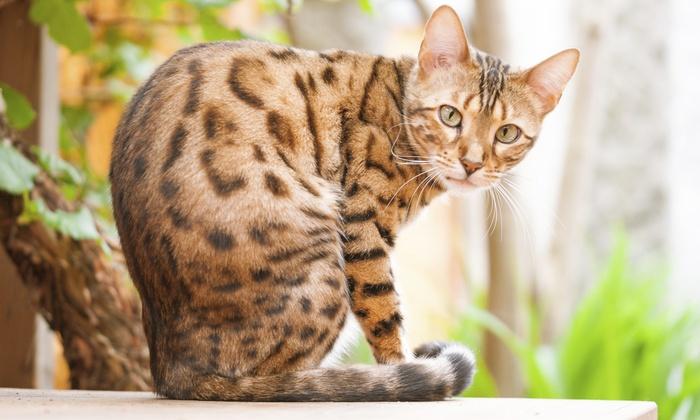 Ladera Ranch Pet Sitting - Orange County: Seven Days of Pet Sitting Services from Ladera Ranch Pet Sitting (50% Off)