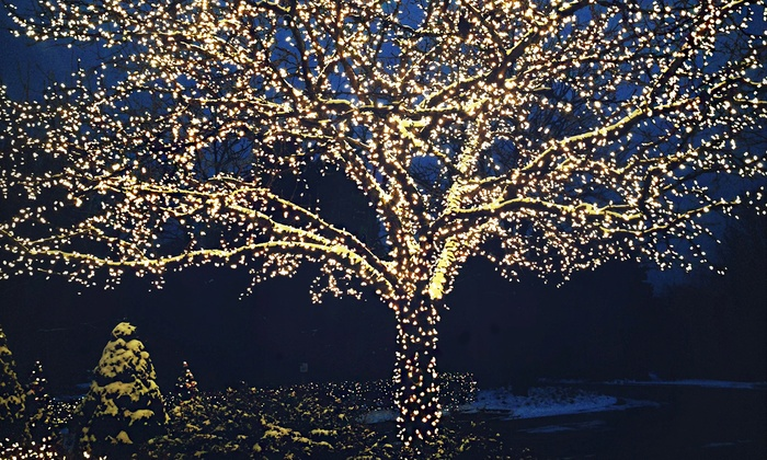 Wexley Home Solar-Powered 100-LED White Fairy Lights