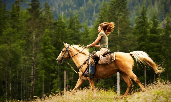 Thunder Crest Performance Horses - Amenia: Private Horseback-Riding Lesson for One or Two at Thunder Crest Performance Horses in Amenia (Half Off)