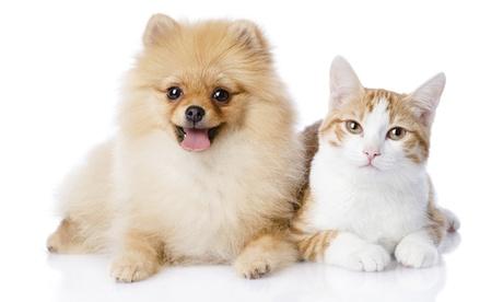 Esterilización de un gato/a o perro/a desde 29 € en Mendebaldea Dogos