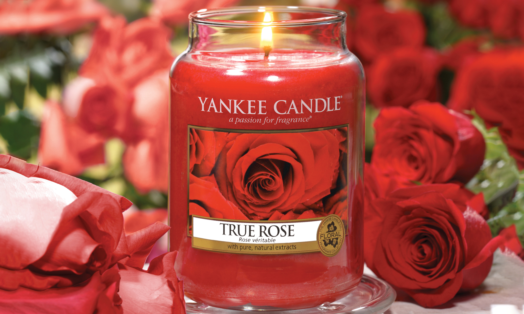 Yankee Candle Large Jar In Choice Of Fragrance From £13.99