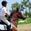 44% Off Private Riding Lessons at Innova Riding Stables