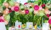 83-Piece DIY Balloon Kit