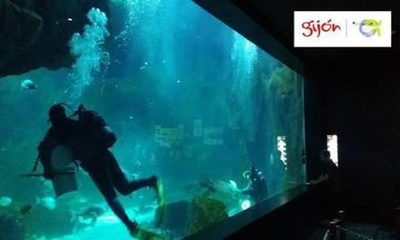 Entrada al acuario de Gijón para adulto y/o niño desde 7,50 €