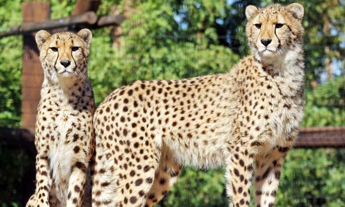 Wildlife World Zoo & Aquarium - Phoenix: Visit for a Child or Adult to Wildlife World Zoo & Aquarium (Up to 23% Off)