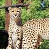 Up to 19% Off at Wildlife World Zoo, Aquarium, & Safari Park