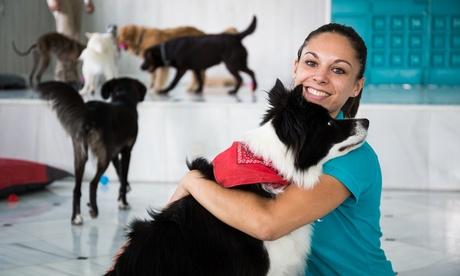 2, 5 o 7 días de guardería o noches de hotel para mascotas desde 9,95 € en Mister Pet Resort