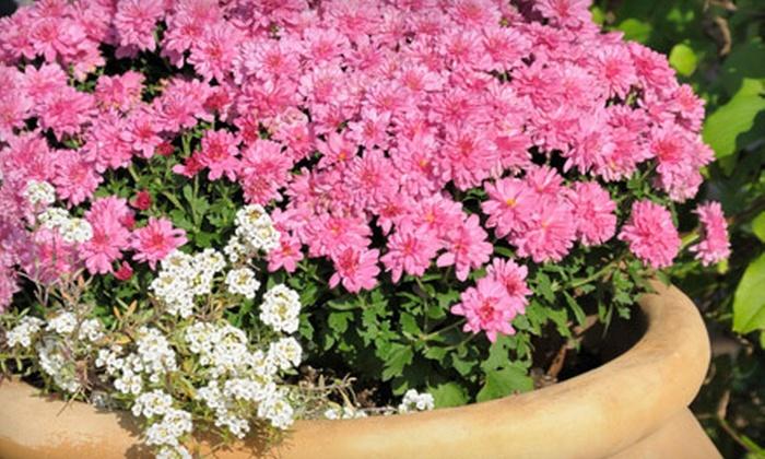 Halla Nursery and Garden Center - Minnetonka - Hopkins: $10 for $20 Worth of Plants and Gardening Gear at Halla Nursery and Garden Center