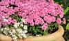 Halla Nursery - Minnetonka - Hopkins: $10 for $20 Worth of Plants and Gardening Gear at Halla Nursery and Garden Center