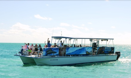 3.5-Hour Dolphin Watch and Snorkel Tour for One, Two, or Four from Barefoot Billy's (Up to 26% Off)