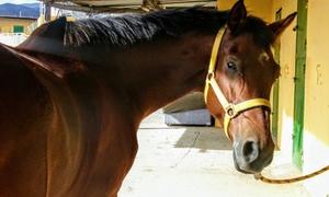 Escuela Ecuestre Gran Canaria:  Paseo a caballo de 30 minutos para 2 personas por 14,95 € en Escuela Ecuestre Gran Canaria