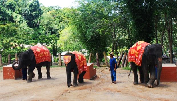 Phuket: Elephant Ride & Animal Show 2