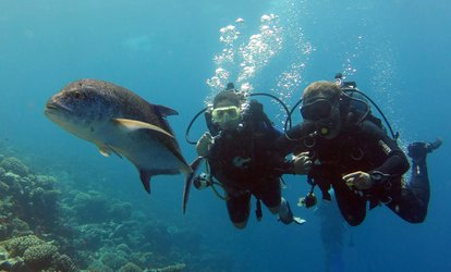 Try Dive Scuba Diving Experience for One or Two at Orca Diving Center