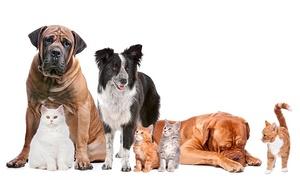 Fotostudio Hoeste: Fotoshoot voor 1 of meerdere huisdieren incl. afdrukken vanaf €19,99 bij Fotostudio Hoeste