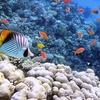 ✈ Sharm El Sheik5*: volo A/R, 7 notti all inclusive e Acqua Park