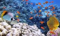 ✈ Egitto, Sharm El Sheik: volo a/r e 7 notti in hotel 5* con formula all inclusive e ingressi illimitati all'Acqua Park