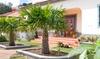 Palmier chinois Trachycarpus