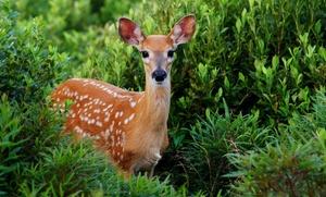 Entrada al parque de animales para adultos y niños con opción a picnic desde 6,95 € en Fauna Navas del Rey