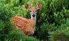 FAUNA NAVAS DEL REY - FAUNA NAVAS DEL REY: Entrada al parque de animales para adultos y niños con opción a picnic desde 6,95 € en Fauna Navas del Rey