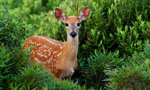 FAUNA NAVAS DEL REY: Entrada al parque de animales para adultos y niños con opción a picnic desde 6,95 € en Fauna Navas del Rey