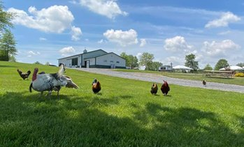 Up to 25% Off Admission to Green Meadows Petting Farm