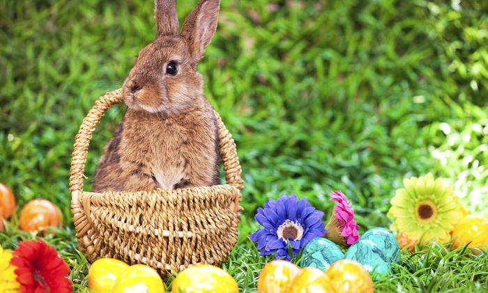 Advocates 4 Animals Adult Egg Hunt - Teamsters Camp: Admission with Drink or Raffle Tickets for Two or Four to Advocates 4 Animals Adult Egg Hunt (Up to 51% Off)
