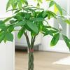Bonsai Braided Money Tree Potted Plant