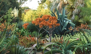 The Ruth Bancroft Garden: Adult Admission for One, Two or Four at The Ruth Bancroft Garden (50% Off)