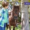 Bono de clases de equitación