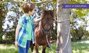 La Finca Pony Club: Bono de 2, 5 o 10 clases de equitación válido para hasta 2, 5 o 10 personas desde 19,90 € en La Finca Pony Club