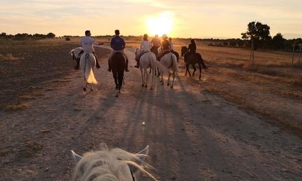 Paseo a caballo para 2 o 4 adultos y opción a 1 o 2 niños en pony desde 19,95 € en Hípica Valle Viñuelas