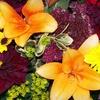 Half Off at Fresh Ideas Flower Company