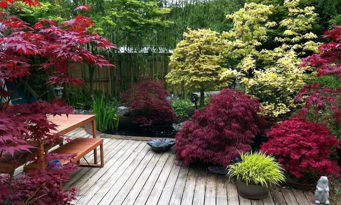 4 ou 8 rables du japon 25 40 cm groupon shopping. Black Bedroom Furniture Sets. Home Design Ideas