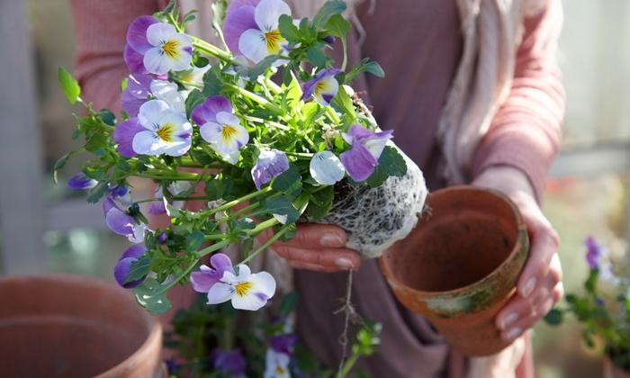 Bakker Piante : Bakker fiori e piante a domicilio groupon