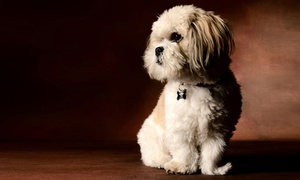 Flash Photography: Pet Photoshoot with One Print at Flash Photography (87% Off)