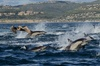 Up to 68% Off Whale Watching Cruise from Davey's Locker