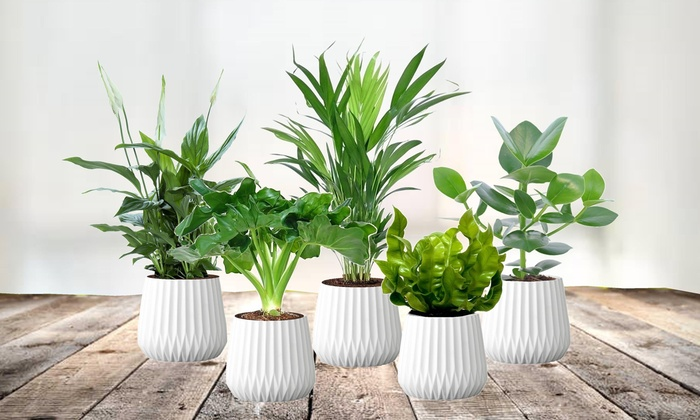 5 luftreinigende Pflanzen | Groupon Goods