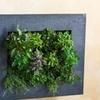 Living Wall Pocket Succulent Planter