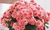Begonia Borias Rosebud Plant