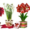 Holiday Planters with Bulb Kits and Preplanted Flowers