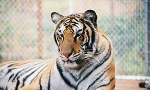 Tiger Creek Wildlife Refuge: Wildlife-Refuge Visit for 2, 4, or 10 at Tiger Creek Wildlife Refuge (Up to 33% Off)
