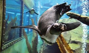 Zoo Hannover: Tagesticket für den Zoo für einen Erwachsenen oder ein Kind (bis 17 Jahren) im Zoo Hannover (bis zu 25% sparen*)