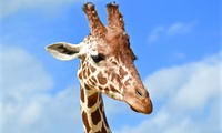 Child (£12.39) or Adult (£17.99) Ticket to Colchester Zoo (20% Off)