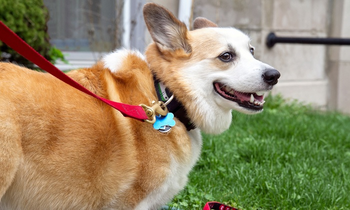 Beastie Besties Dog Walking and Pet Care Services - North Jersey: $60 for Initial Consultation and Two Weeks of Dog Walking from Beastie Bestie Pet Care & Walking Services ($127 Value)