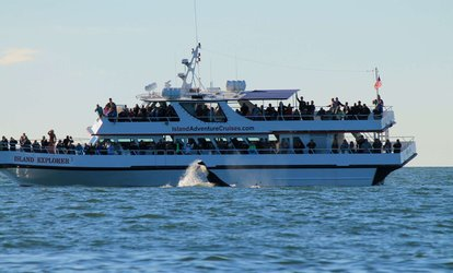30% Off Whale Watching at Island Adventures Whale Watching