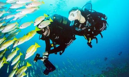 Beginnertauchkurs Open Water Diver – bei Action Sport Shops (bis zu 32% sparen*)