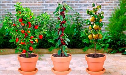 3/6/12 colonnes d'arbustes fruitiers,100% bio, comprenant cerisiers, poiriers pommiers,80 cm à la livraison avec racine