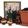 Indoor Paperwhite Narcissus Bulb Gift Kit (9-Piece)
