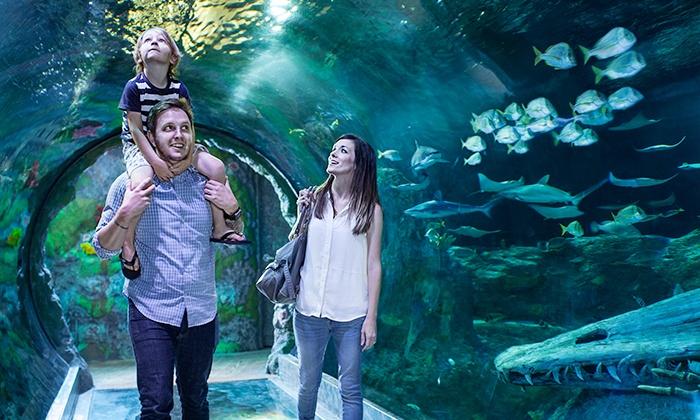 SEA LIFE Orlando Aquarium in - Orlando, FL | Groupon