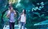 Up to 49% Off Admission to SEA LIFE Orlando Aquarium